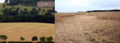 Wentworth+Castle+Crop+Circle.png
