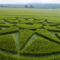 Two new crop circles from Wiltshire, UK