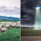 Cryptic Disappearance of Sheep From A Filed In Lincolnshire Linked To UFOs